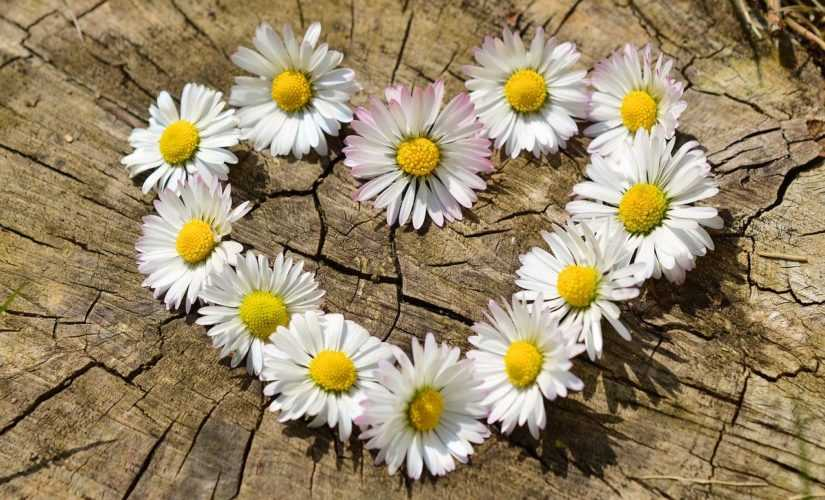 If you Love a Flower